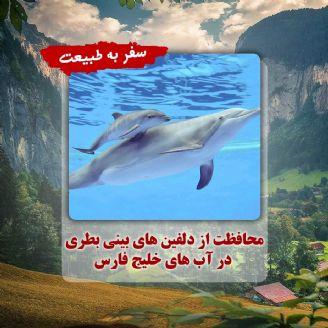 محافظت از دلفین های بینی بطری در آب های خلیج فارس