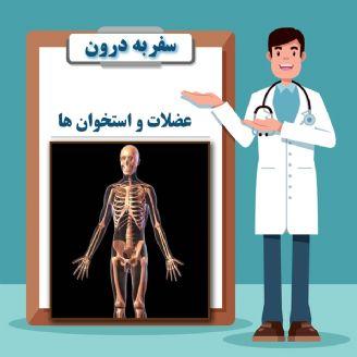 عضلات و استخوان ها