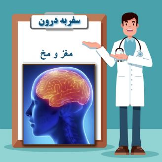 مغز و مخ