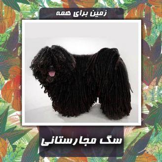 سگ مجارستانی