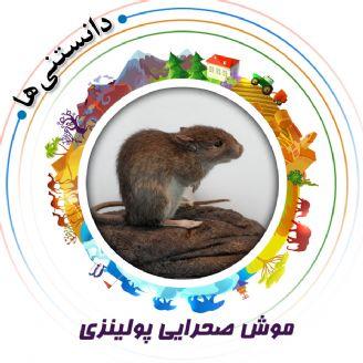 موش صحرایی پولینزی