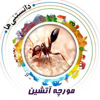 مورچه آتشین