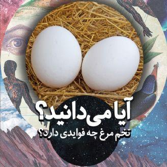 آیا می دانید تخم مرغ چه فوایدی دارد؟