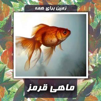 گُلدفیش یا ماهی قرمز