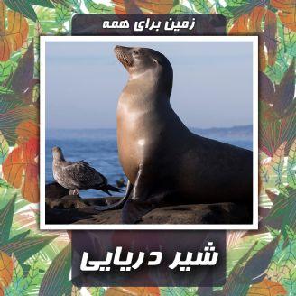 شیر دریایی