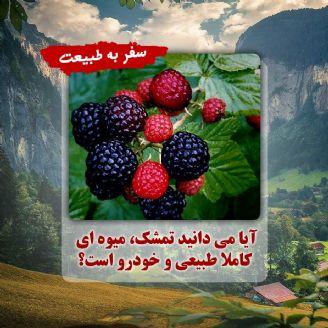 آیا می دانید تمشك، میوه ای كاملا طبیعی و خودرو است؟