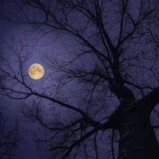 حریر مهتاب