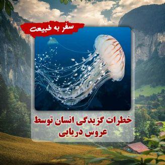 خطرات گزیدگی انسان توسط عروس دریایی