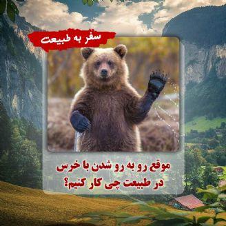 موقع رو به رو شدن با خرس در طبیعت چی كار كنیم؟