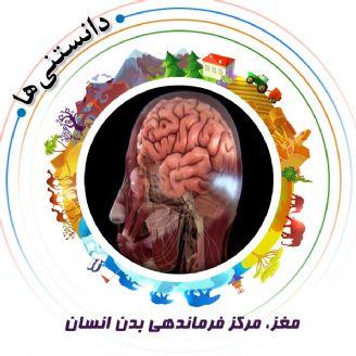 مغز، مركز فرماندهی بدن انسان