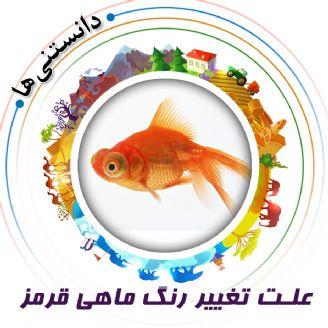 علت تغییر رنگ ماهی قرمز