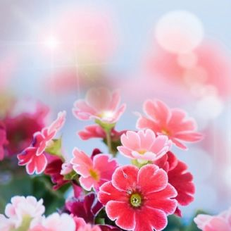 بهار تو راهه