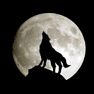 گرگِ سیاه
