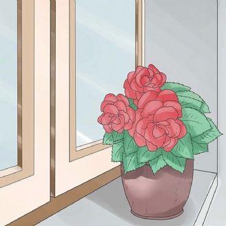 گل سرخ كوچولو