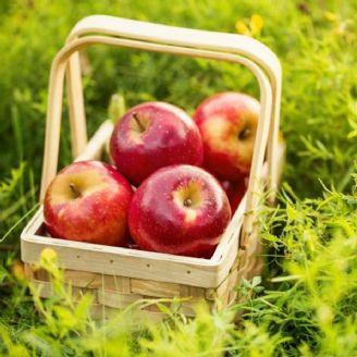 سیب شیرین