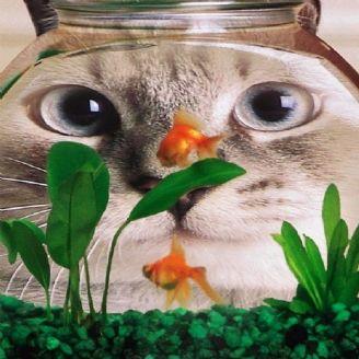 گربه و ماهی